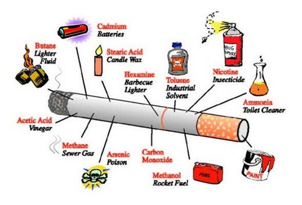 Deixar de fumar um organismo para produzir a nicotina